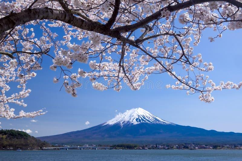 Fujisanberg met kersenbloesem in de lente, Kawaguchiko-meer, Japan stock fotografie