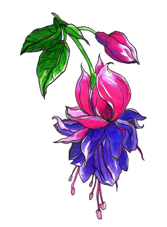 Fuksja tropikalny kwiat dla ślubnych drukowych produktów royalty ilustracja