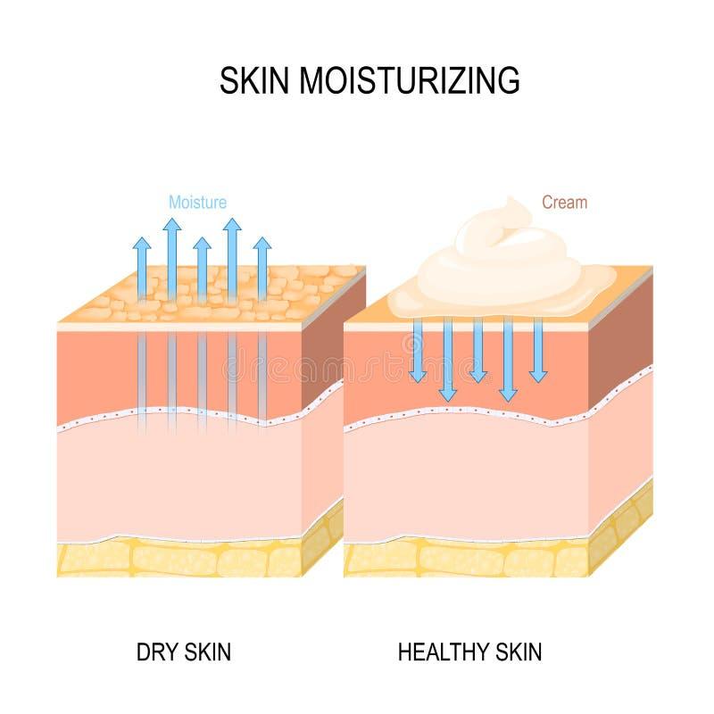 Fukta för hud Torr och sund hud med kräm, skum eller lotion vektor illustrationer