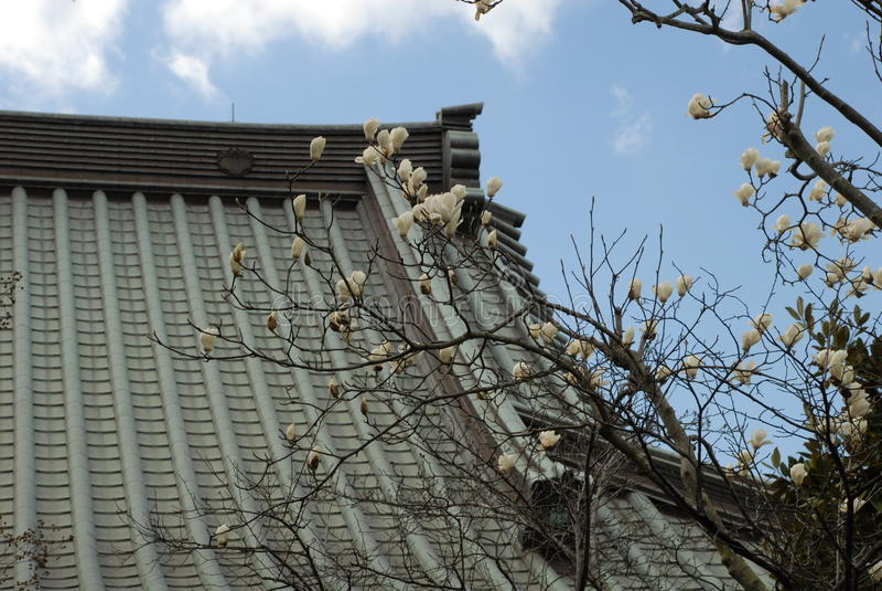 Fukuroda Japan arkivbild