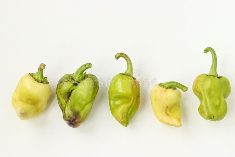 Ful organisk spansk peppar fem på vit bakgrund, fult matbegrepp, horisontalfoto, bästa sikt royaltyfria foton