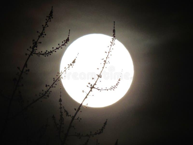 Fulgor da Lua cheia de fevereiro acariciado por ramos delicados fotos de stock