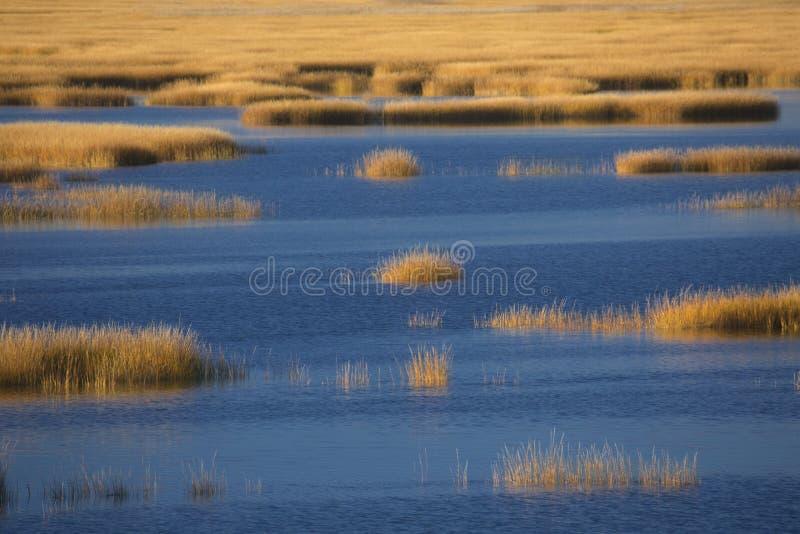 Fulgor de por do sol morno no pântano no ponto de Milford, Connecticut foto de stock royalty free