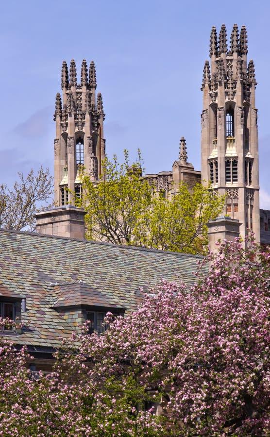 fullödig universitetar yale för byggnadslag royaltyfria bilder