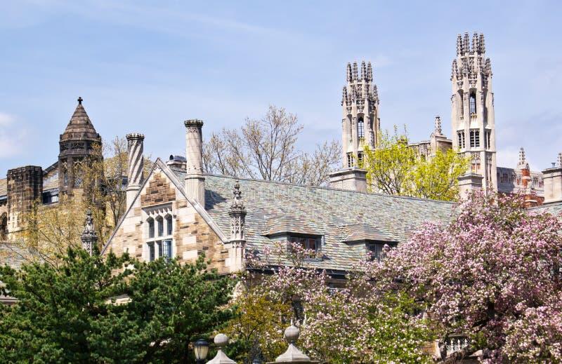 fullödig universitetar yale för byggnadslag royaltyfri fotografi