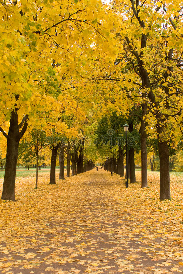 Full autumn colors. Autumn colors in Oslo, Norway stock images