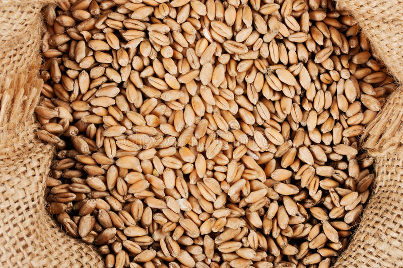 Download Full bag with grain stock image. Image of plant, agriculture - 21858381