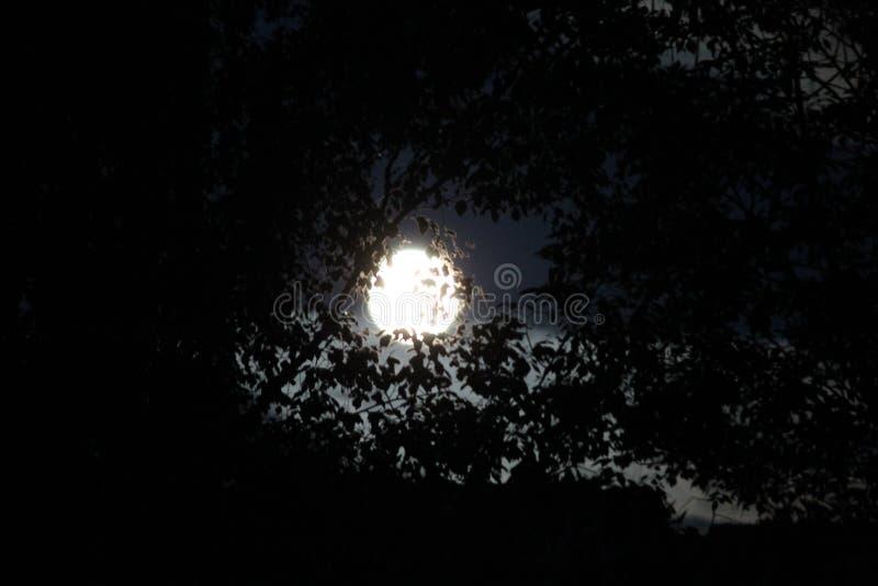 Full big `blue` moon stock photography