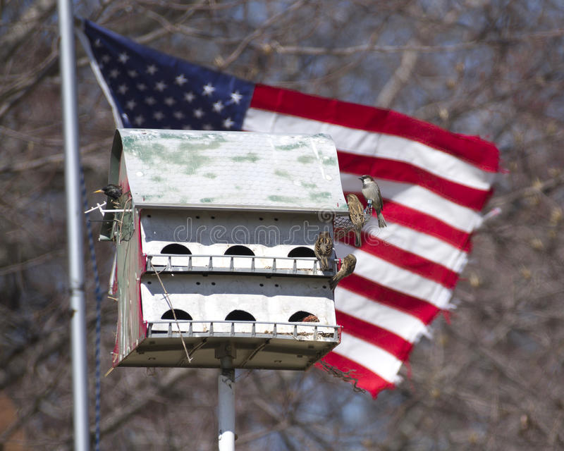 Full birdhouse in America royalty free stock photography