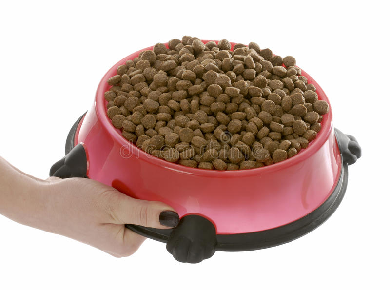 Full bowl of dog food royalty free stock image