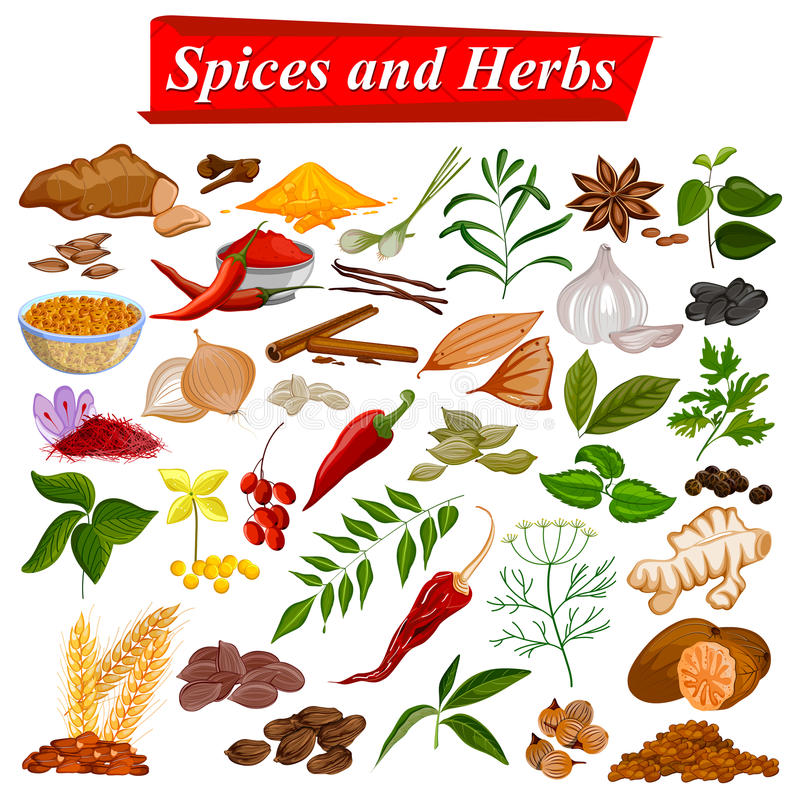 Full collection of aromatic Spices and Herbs used for cooking. Illustration of full collection of aromatic Spices and Herbs used for cooking royalty free illustration