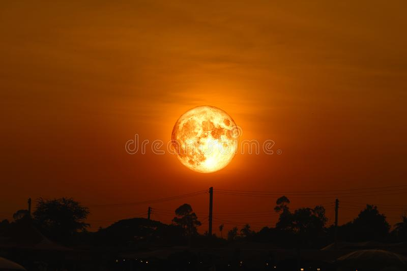 full egg moon back on silhouette plant on night sky stock photography