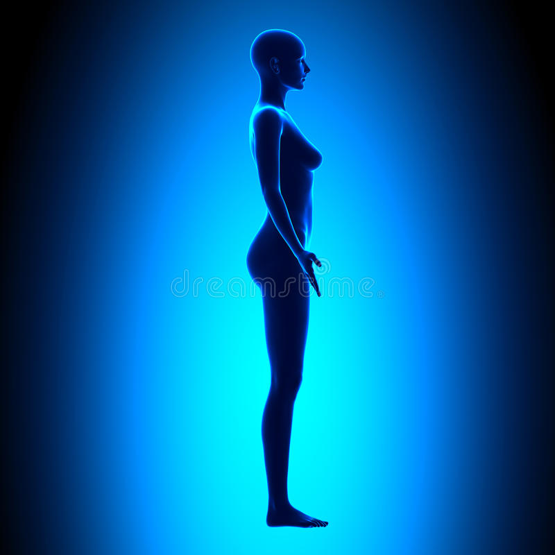 Full Female Body - Side View - Blue concept royalty free illustration