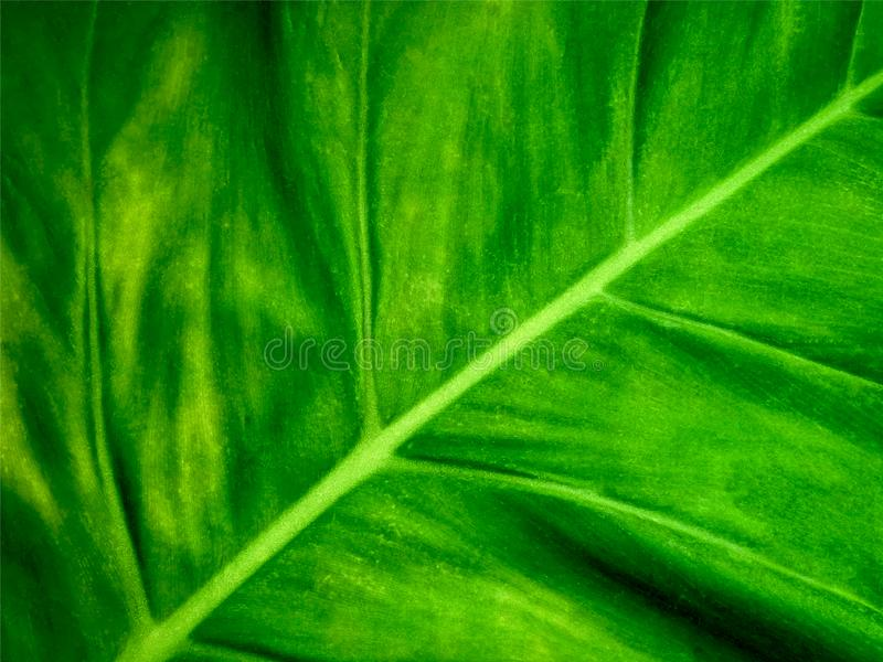 Full Frame Background of Green Leaf Texture. Full Frame Background of Close-up Green Leaf Texture stock photos