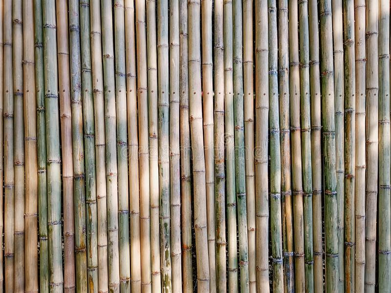 Full Frame Background of Traditional Bamboo Sticks Wall. With Light and Shadow royalty free stock photos