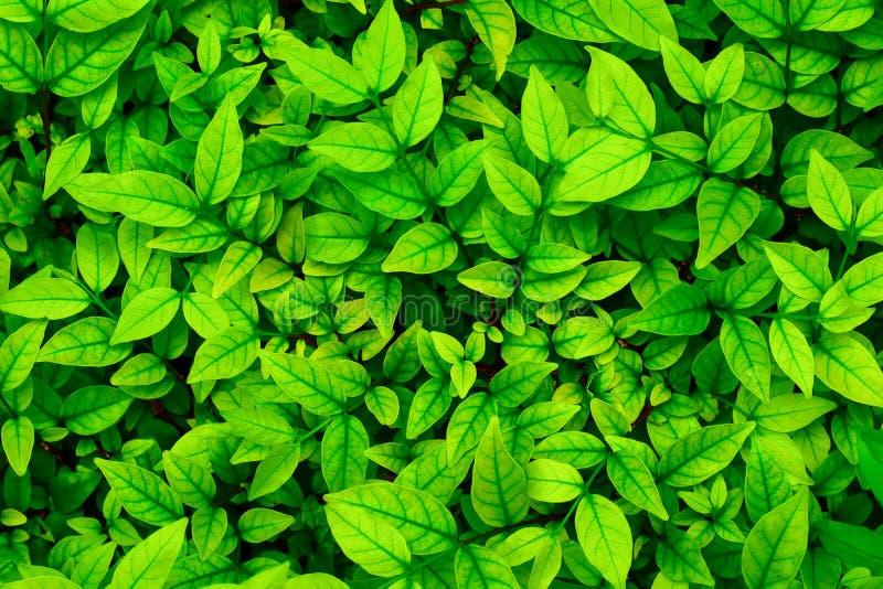 Full frame green leaf nature for background stock photo