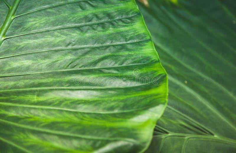 full frame of green stock photos