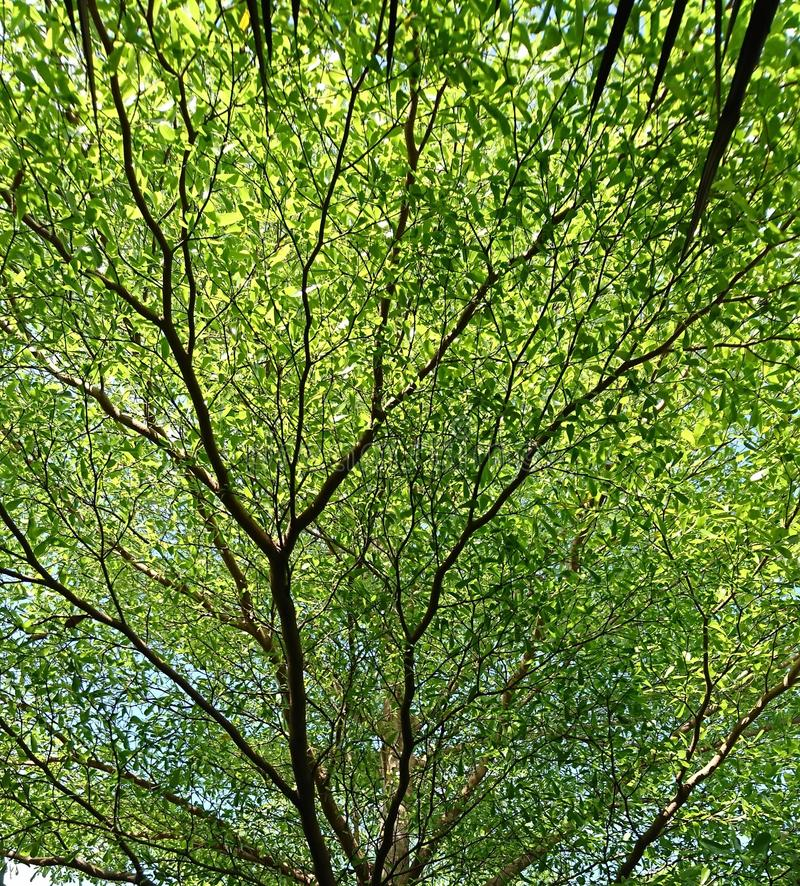 Full frame of green tree / branches / leaf royalty free stock photos