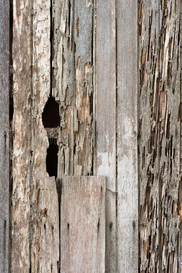Full frame image of a damage wooden house wall because of a termites problem. Concept of nature, pests and wood background royalty free stock image