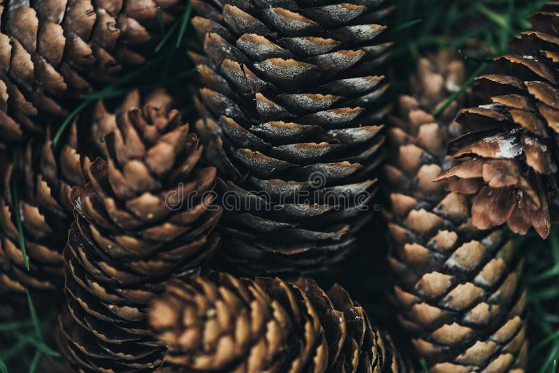 Full frame image of pine. Cones background stock photography