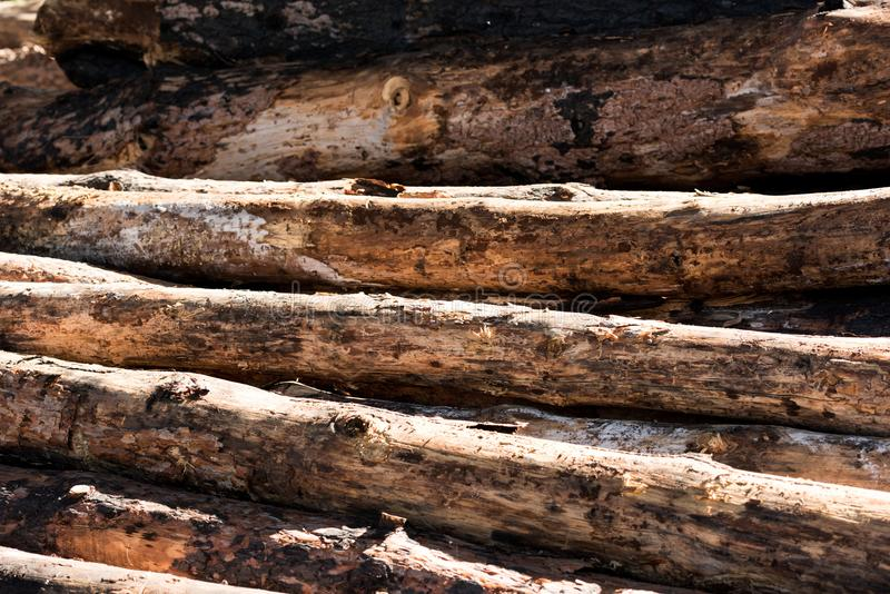 Full frame image of timber logs placed. In row stock photo