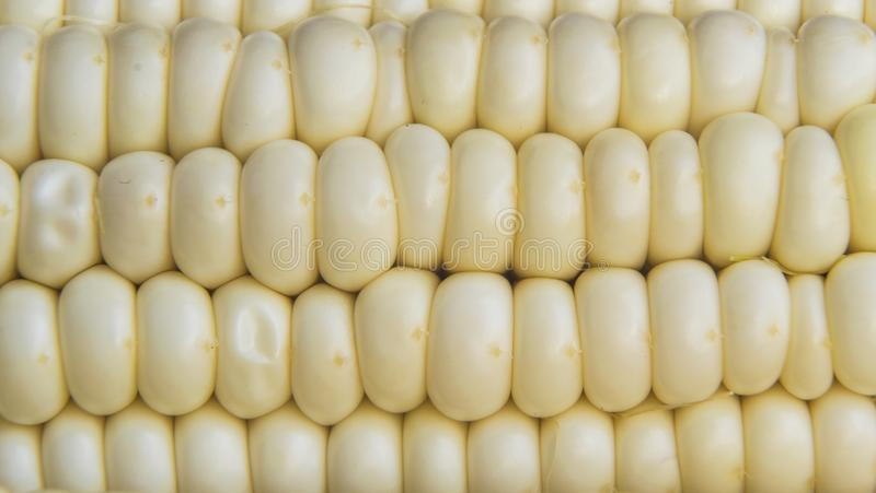 Full frame photo of fresh, organic corn crob.  stock photo