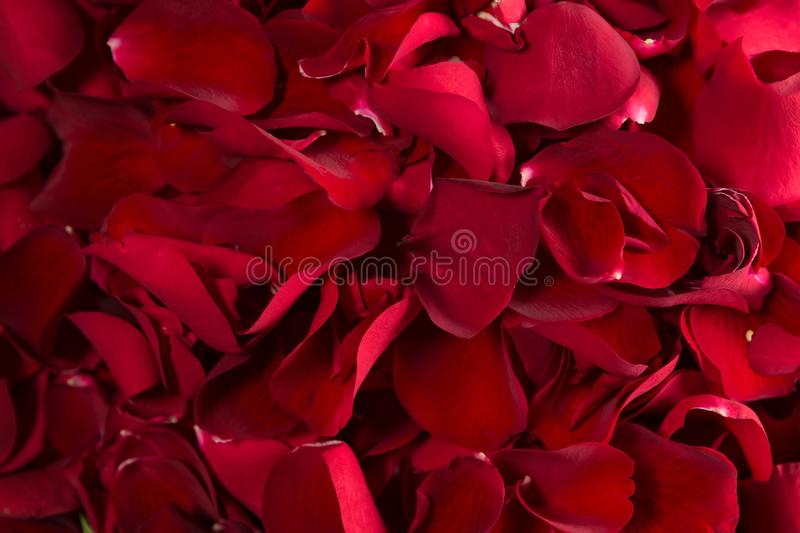 Full frame of red rose petals stock images