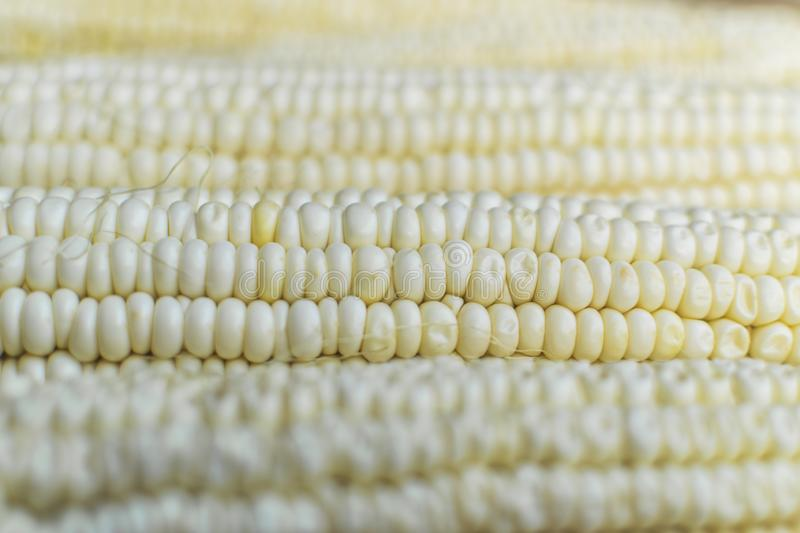 Full frame and selective focus photo of fresh, organic corn.  stock photography