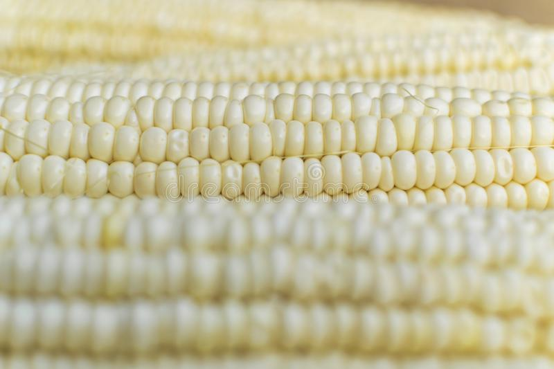 Full frame and selective focus photo of fresh, organic corn.  royalty free stock photos