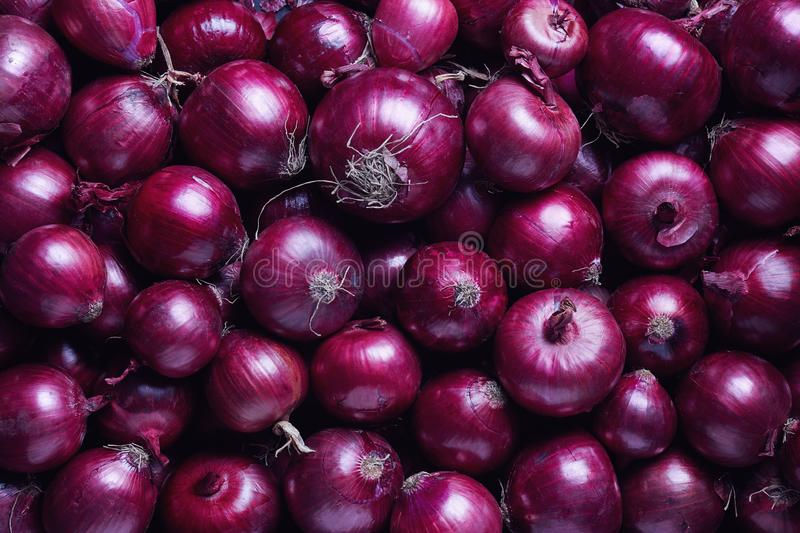 Full Frame Shot Of Purple Onions. Fresh purple onions as a background royalty free stock image