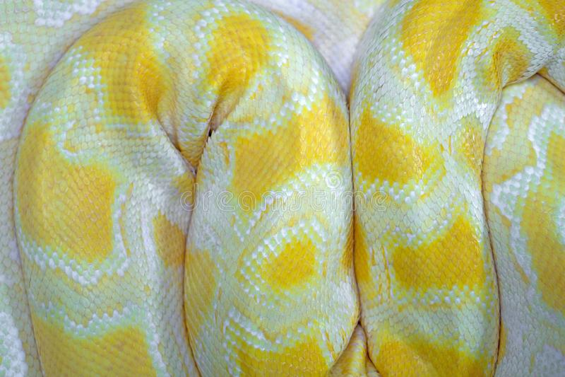 Full Frame Shot Of Yellow Snake Skin.  stock images