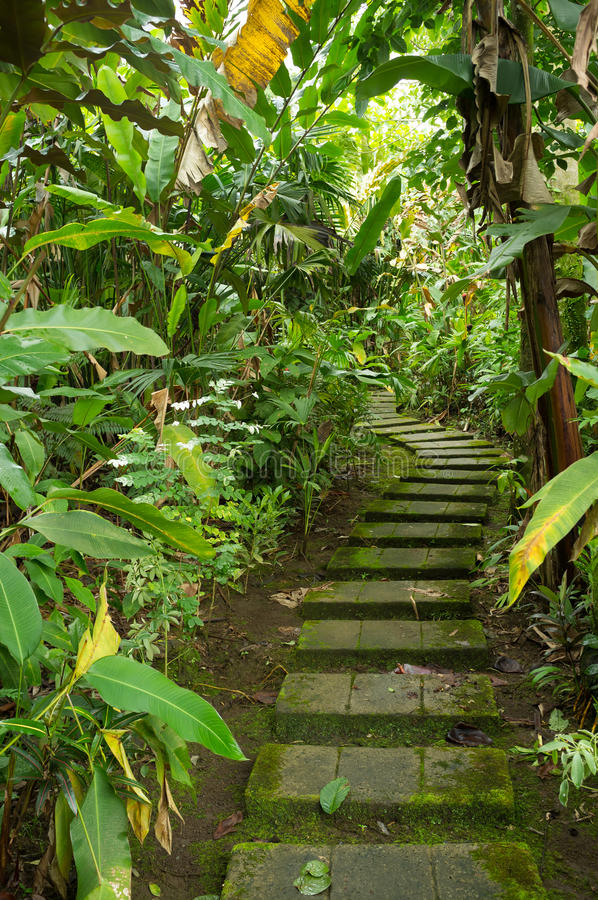 Tropical vegetation stock photography