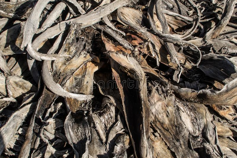 Full frame of pruning residues. Full frame take of rotting pruning residues stock photography