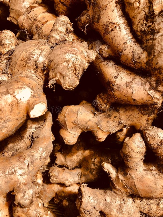 Full frame of texture, Group of Gingers For Sale At Market. Gingerol contained in ginger has a regulating effect on the stagnation of digestion and circulation royalty free stock photography
