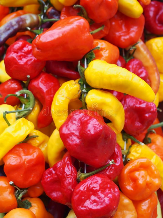 Full frame vibrant close up of bright colorful mixed variety peppers in shades of red, orange and yellow stock images