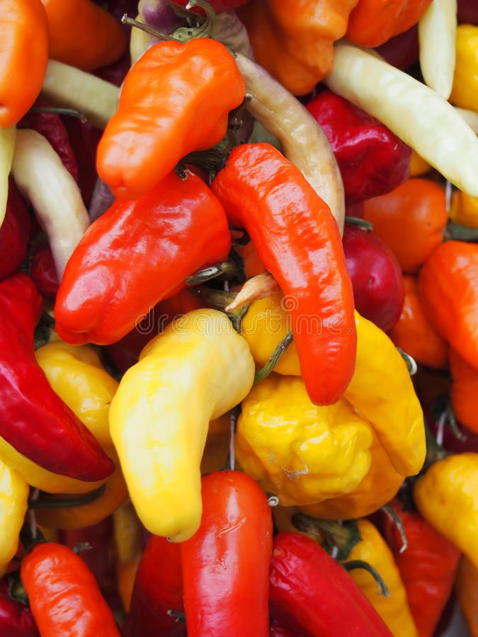 Full frame vibrant close up of bright colorful mixed variety peppers in shades of red, orange and yellow royalty free stock photography
