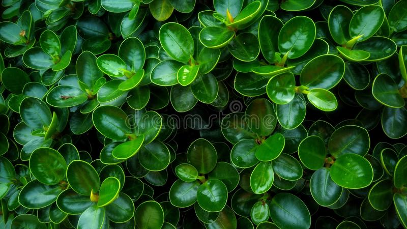 Full of green royalty free stock images