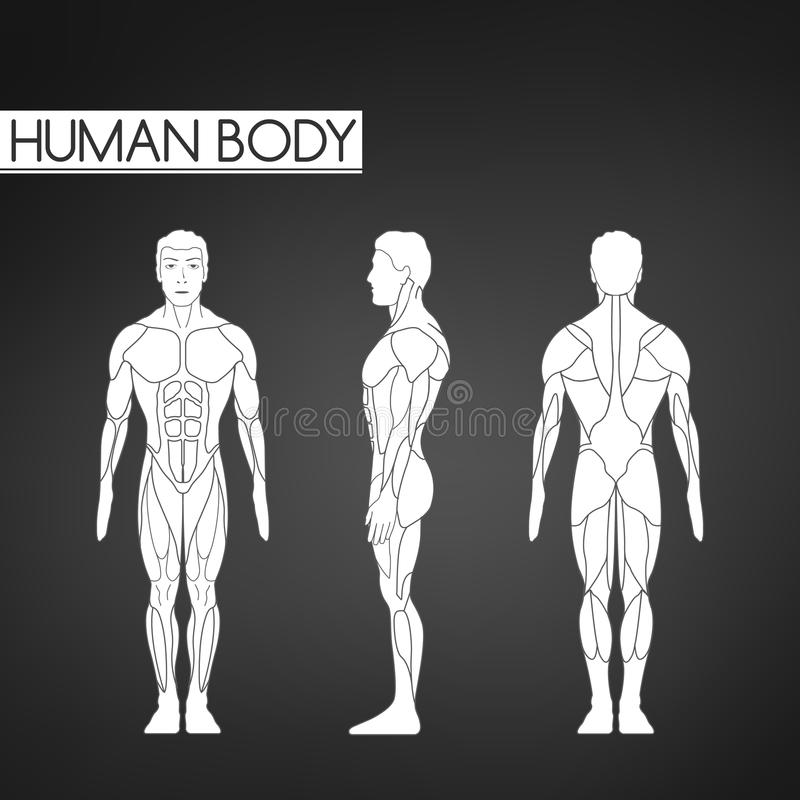 Full längdmuskelkropp, framdel, baksidasikt av en stående man royaltyfri illustrationer