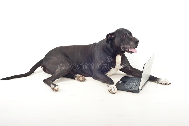 Full length of dog with laptop stock photos