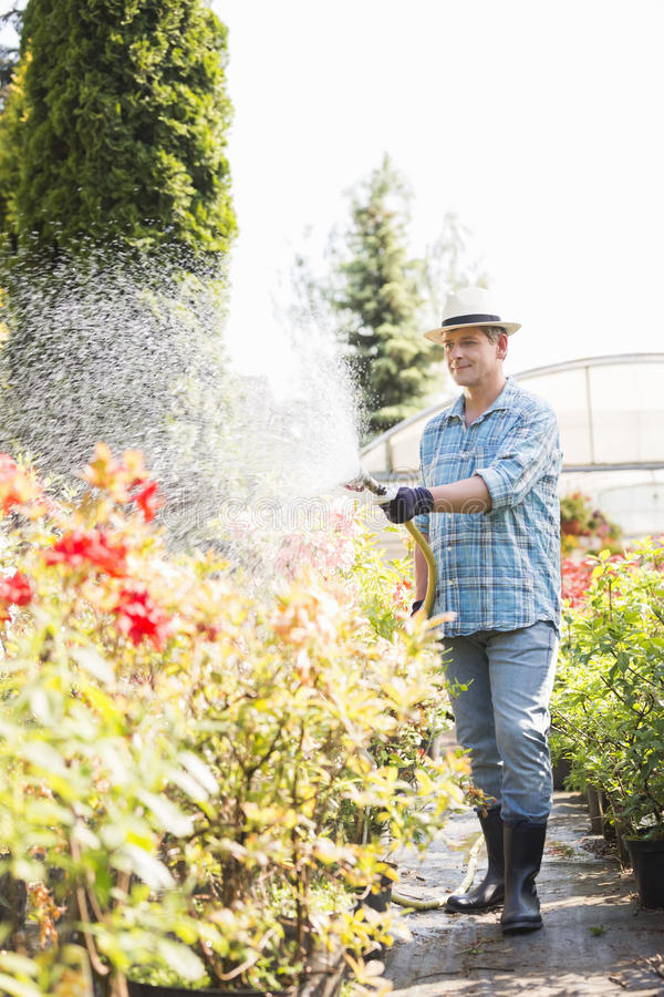 Full-length of man watering plants outside greenhouse. Full-length of men watering plants outside greenhouse stock images