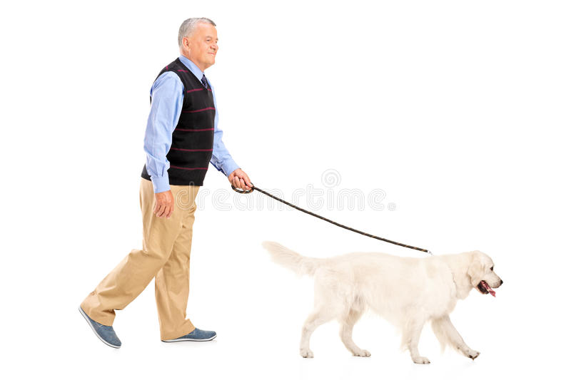 Full length portrait of a senior man walking a dog. On white background stock photos