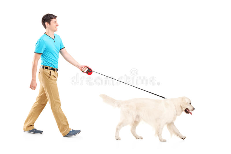 Full length portrait of a young man walking a dog. On white background royalty free stock image
