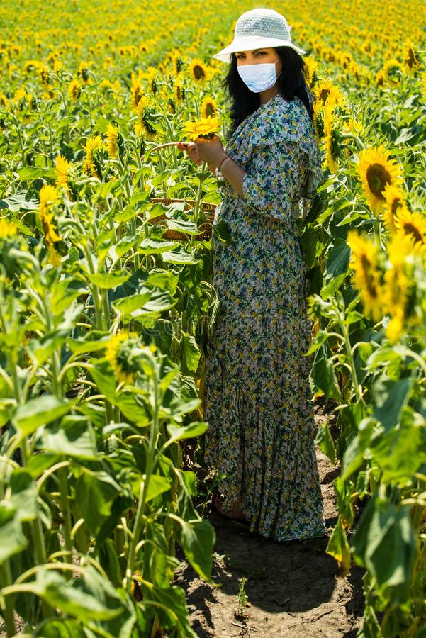 Full length of woman in sunflowers field during Covid19 Pandemic stock photo