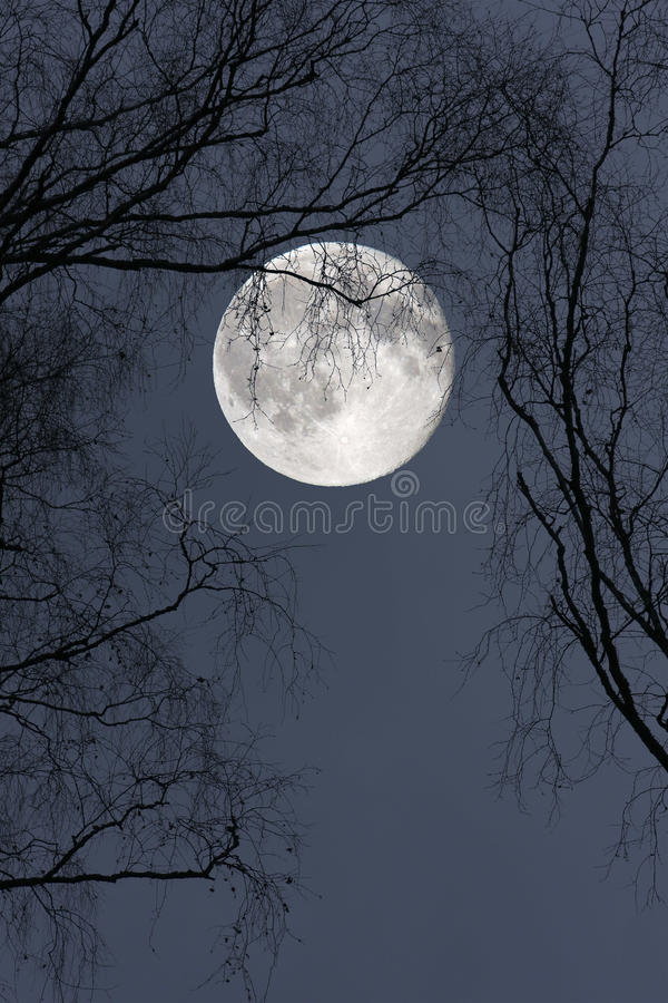 Download Full Moon stock photo. Image of tree, night, bare, background - 11581952