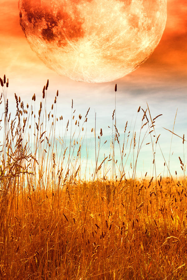 Full moon. Red full moon over fall meadow of wild grass; composite stock images