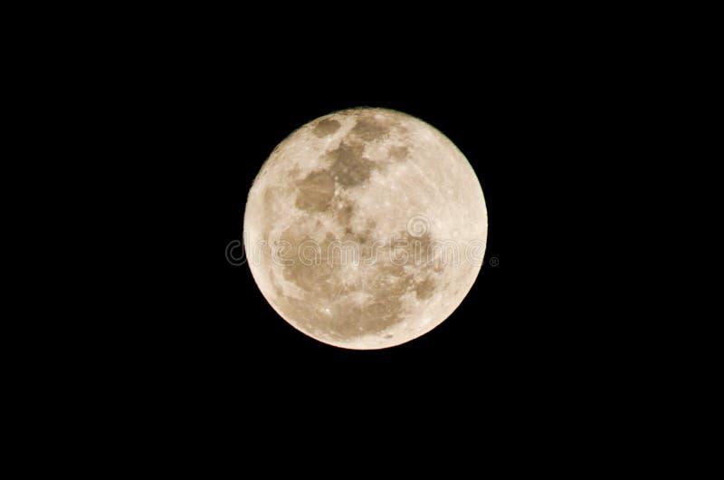 Full moon. Stock Vector Illustration: full moon vector royalty free illustration