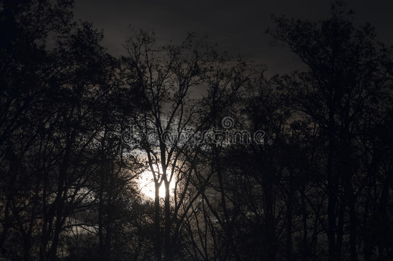 Full moon behind naked tree branches and twigs in night stock photo