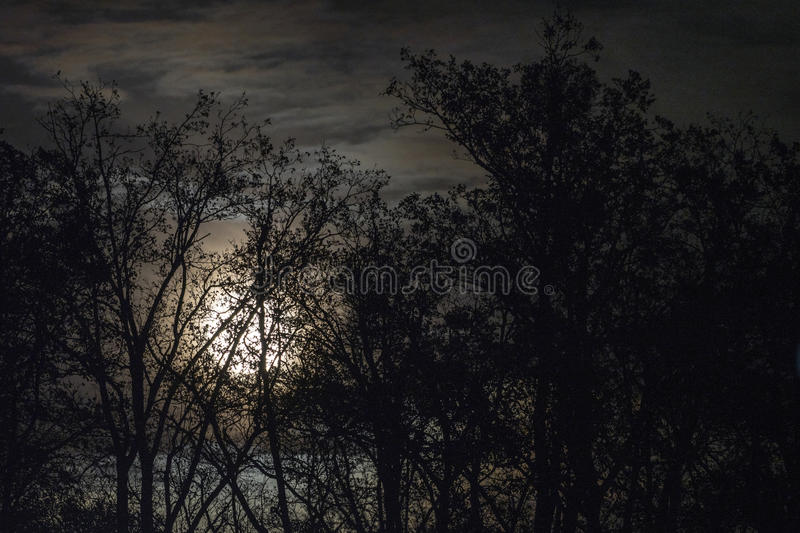 Full moon behind naked tree branches and twigs in night stock images