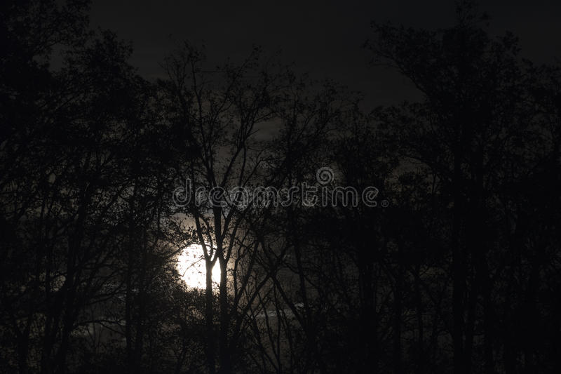 Full moon behind naked tree branches and twigs in night royalty free stock photography