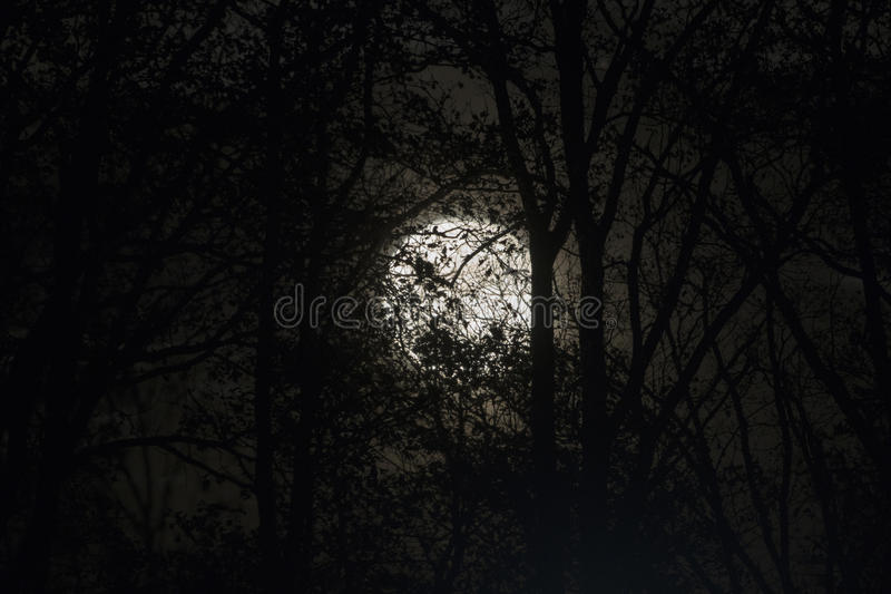 Full moon behind naked tree branches and twigs in night royalty free stock images